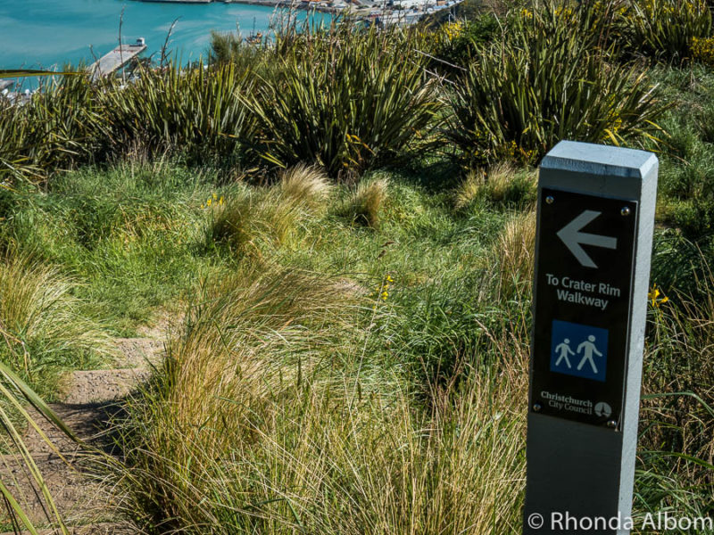 Heading to the crater rim trail of Mount Cavendish in the Port Hills above Christchurch New Zealand
