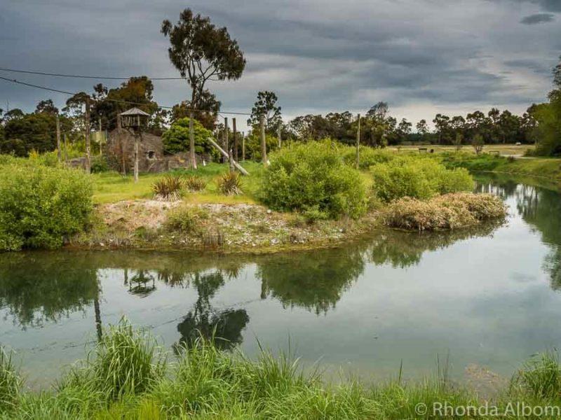 Siamang gibbons habitat at Orana Wildlife Park in Christchurch New Zealand