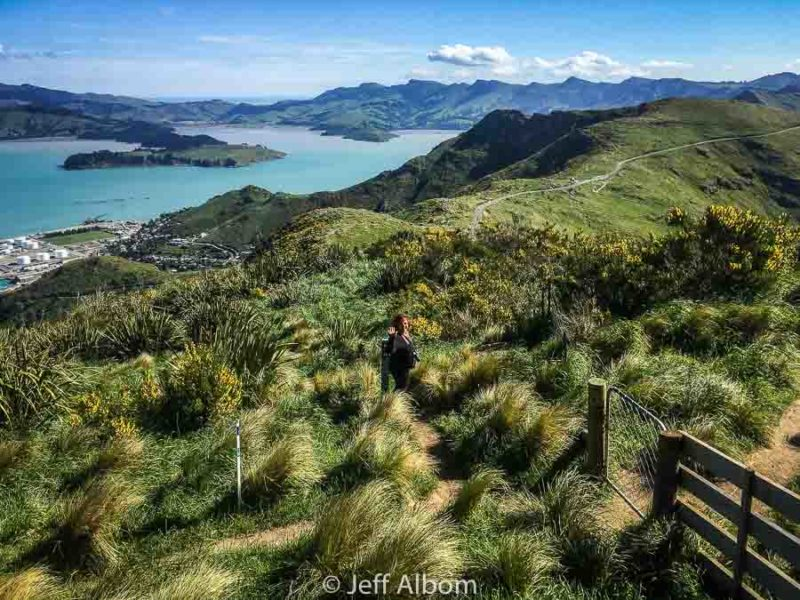 Crater Rim Trail from the Christchurch Gondola summit in New Zealand