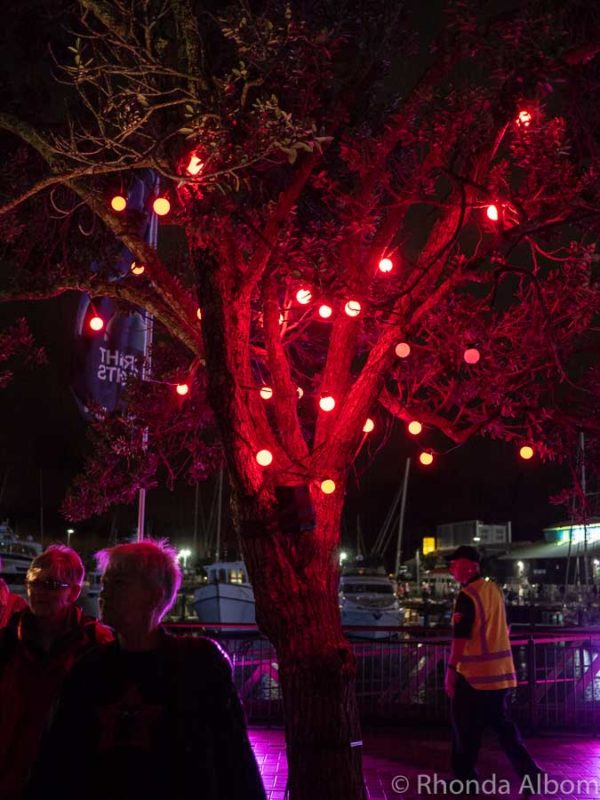 Trees lit up at Viaduct Harbour in Auckland at night, New Zealand