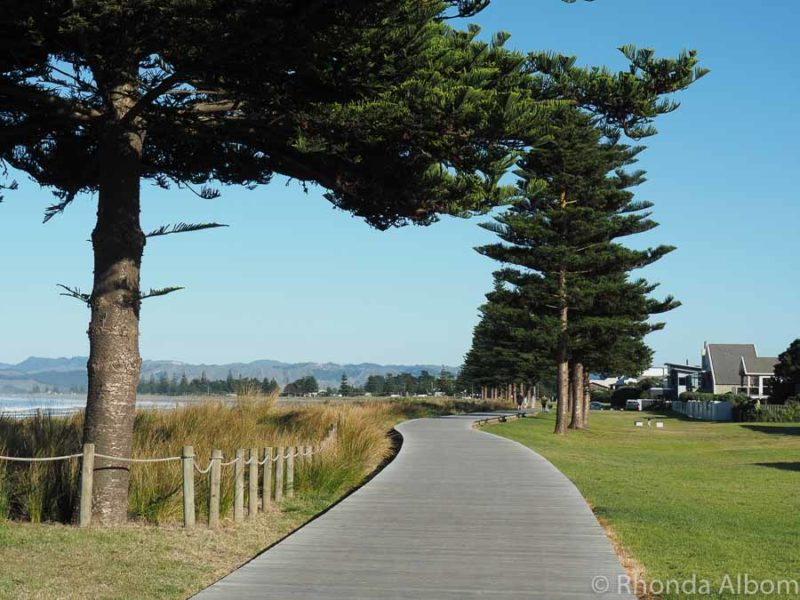Walking the boardwalk is one of the many things to do in Gisborne New Zealand