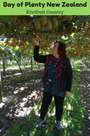 Touring Kiwifruit Country in the Bay of Plenty New Zealand