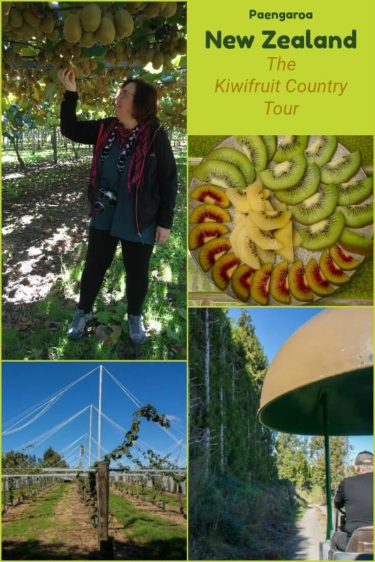 Touring Kiwifruit Country is a chance to see how kiwifruit is grown and processed in New Zealand