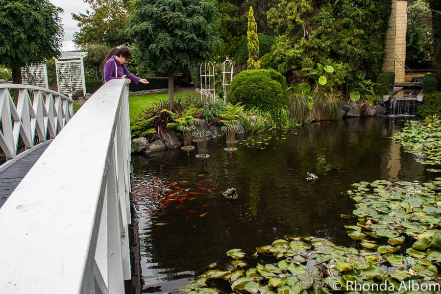 Bridge, pond, lily pads, fish and crocodile heads at Ngatea Water Gardens in New Zealand