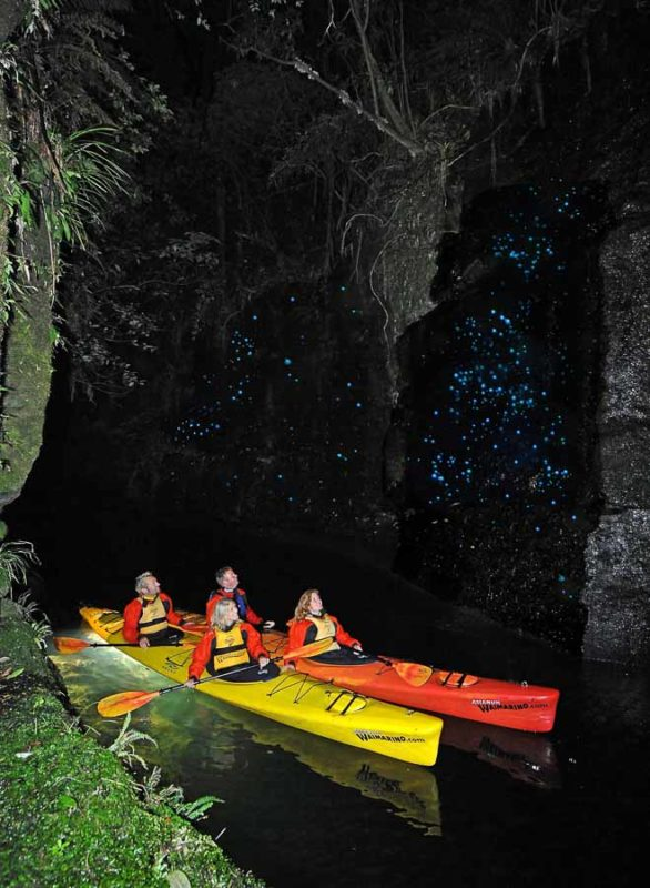 Glow Worm tour, tauranga, New Zealand
