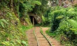 Karangahake Gorge Walks: Windows out of Old  Gold Mines
