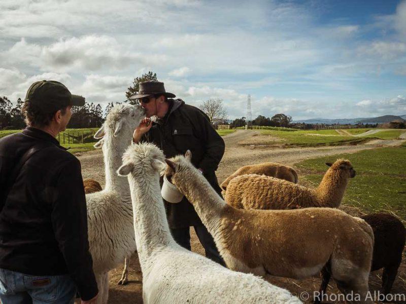 Agrodome Farm Tour, Rotorua New Zealand