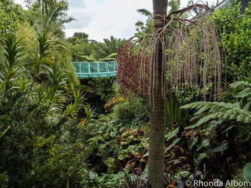 Tropical Garden, Hamilton Gardens, New Zealand
