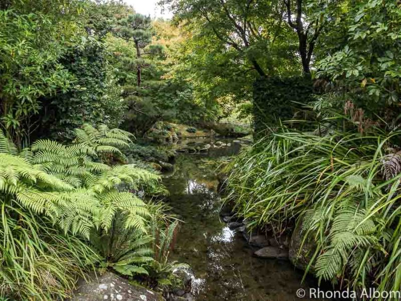 Green ferns along a river in New Zealand