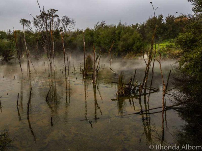 Kuirau Park in Rotorua New Zealand is one of the free things to do in Rotorua
