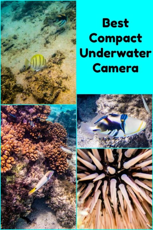 Photos from our recommended compact underwater camera