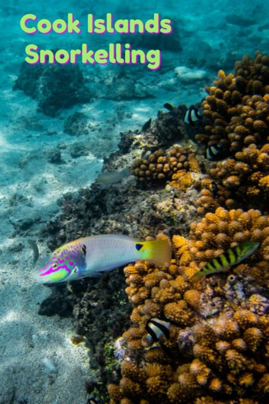 Cook Island Snorkelling captured in underwater photography