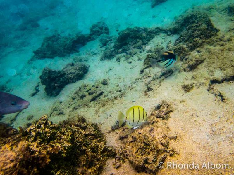 Snorkelling at Titikaveka Beach and captured on an underwater compact camera