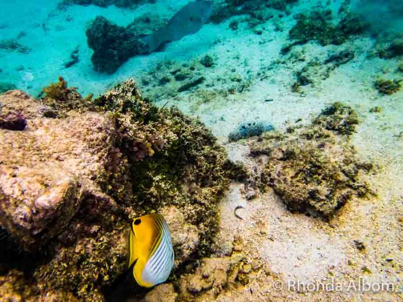 Snorkelling off a Rarotanga Beach in the Cook Islands