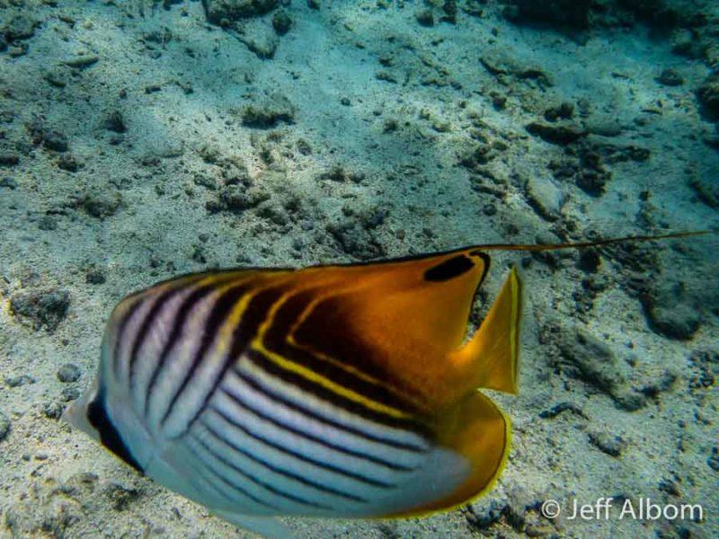 Snorkelling near the Rarotongan, Rarotonga, Cook Islands