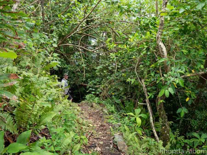Steep hiking trail in the National Park of American Samoa