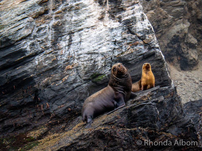 Sealions on Isla Choros, part of the Humboldt Penguin National Reserve of Chile
