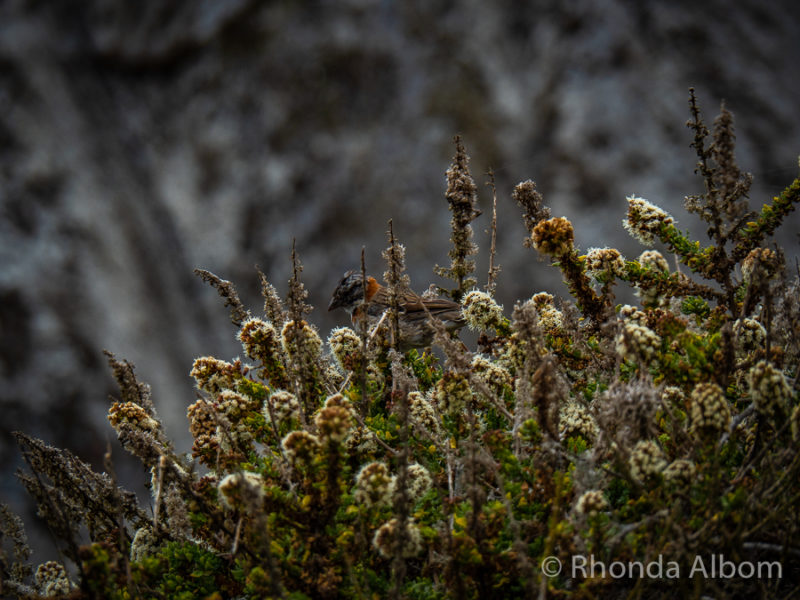 Flora on Isla Damas, part of the Humboldt Penguin National Reserve of Chile