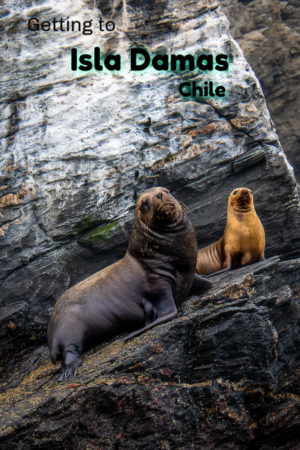 Isla Damas and Isla Choros are loaded with wildlife like sealions and penguins.they are part of Chile's Humboldt Penguin National Reserve.