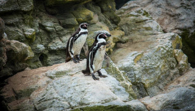 Getting to Isla Damas – Seeing Penguins in Chile