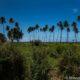 Palm trees line the coast on Tahiti Island in French Polynesia