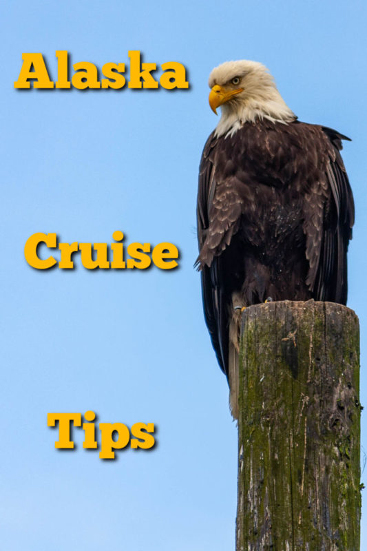 Cruising in Alaska is a once in a lifetime experience filled with rugged wilderness, glaciers, wildlife (like this bald eagle), stunning colors and so much more. Here you will find a few tips to make your cruise even better.