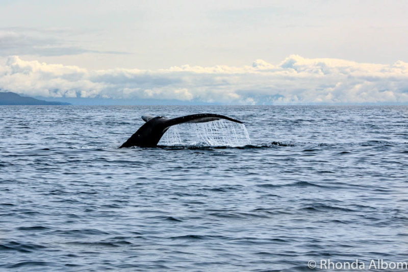 One of the highlights and best Alaska cruise tips is whale watching.