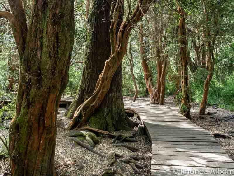 Arayan Forest in Llao Llao Municipal Park, Argentina