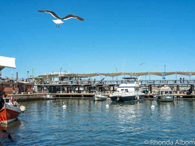 The port at Punta del Este Uruguay