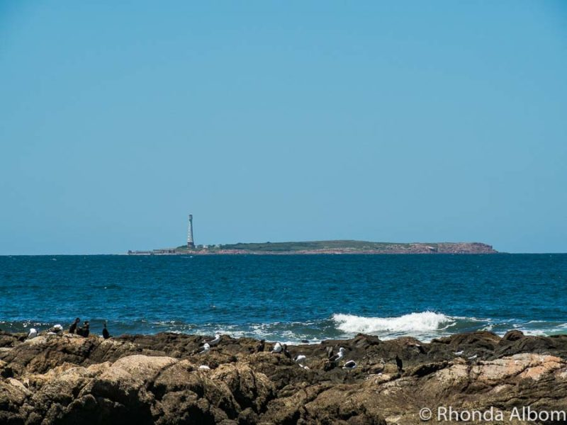 Isla de Lobos, an island of sea lions in Uruguay