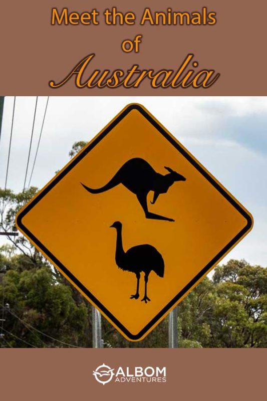 Kangaroo and emu road sign in Australia