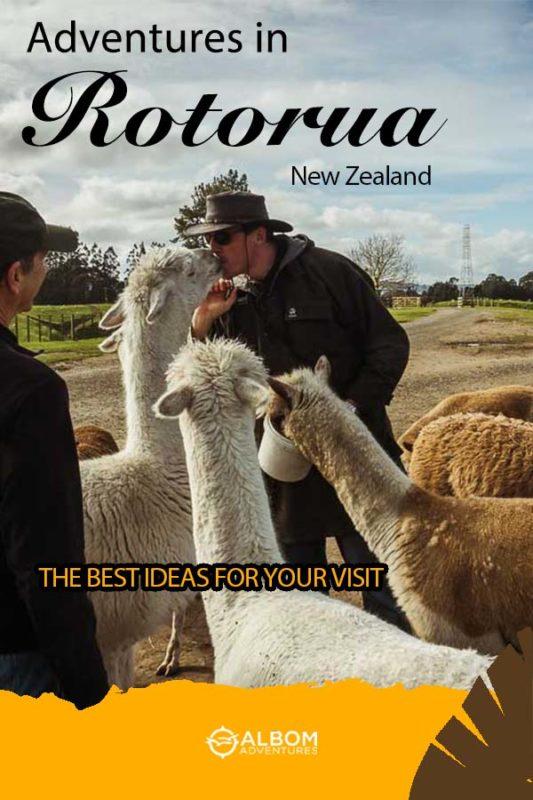 Agrodome farm visit with llamas in Rotorua New Zealand