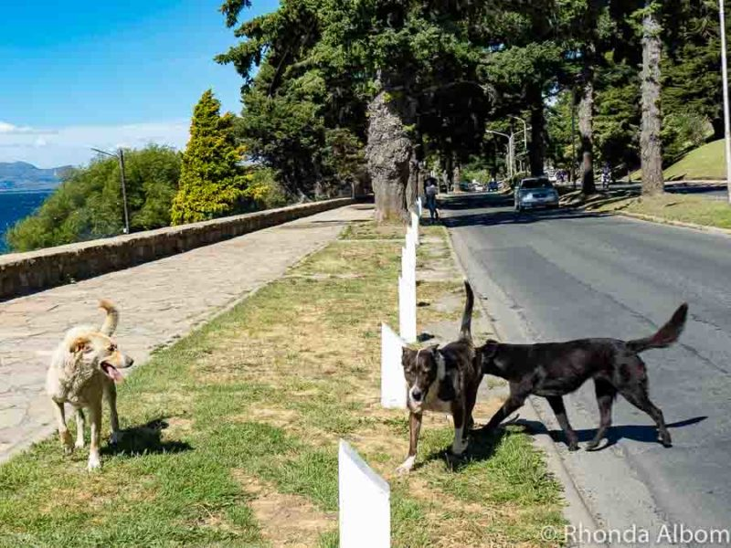 Knowing that there are stray dogs like these three is one of the many Argentina travel tips
