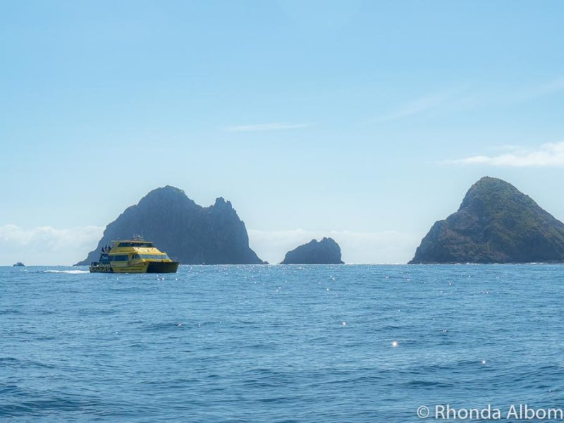 Whale spotting from the  Explore Ocean Adventure - one of the most exciting things to do in Bay of Islands, New Zealand