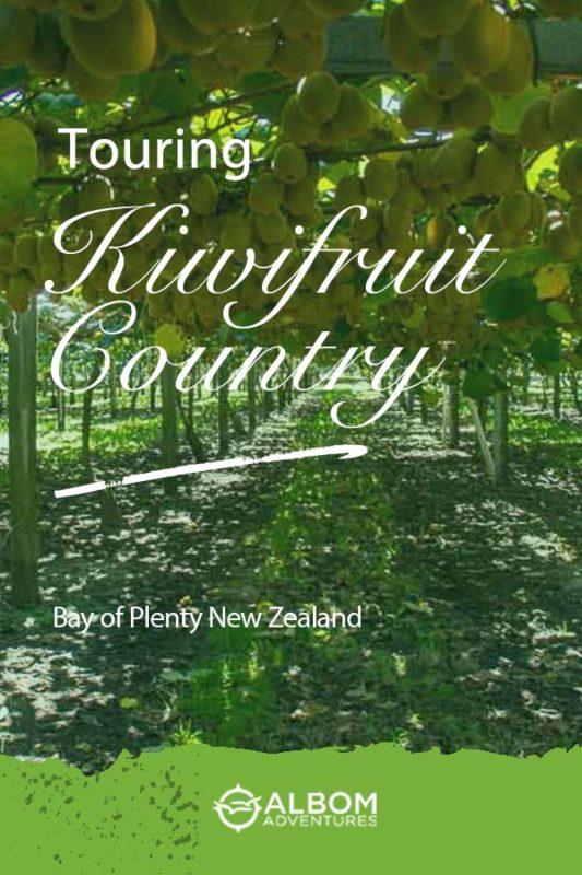 A view of the kiwi fruit vines and growing trellis at Kiwifruit Country in Paengaroa, Bay of Plenty New Zealand