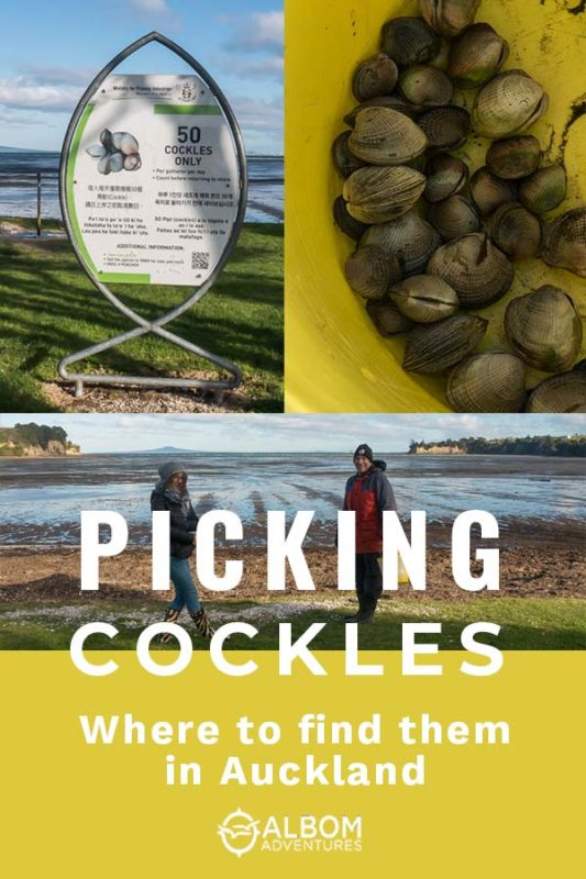 Fisheries cockle limit sign, a bucket of cockles, and 2 cockle pickers in front of Okoromai Bay, Auckland in New Zealand