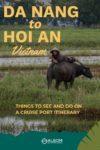 A man resting on a water buffalo near Hoi An Vietnam
