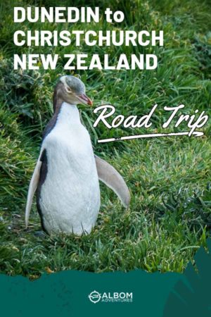A yellow-eyed penguin seen near the Katiki Point Lighthouse on the South Island New Zealand