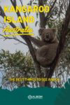 A Koala in a tree at Flinders Chase National Park on Kangaroo Island Australia