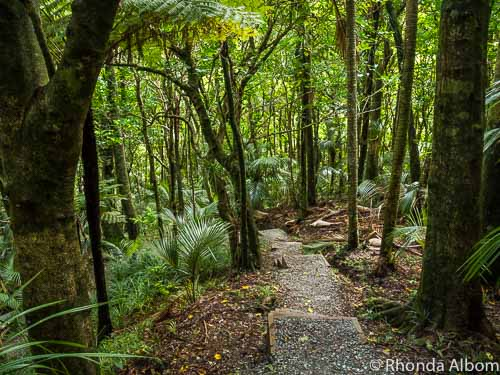Hiking path through the trees between hot pools at Morere Hot Springs in Hawkes Bay