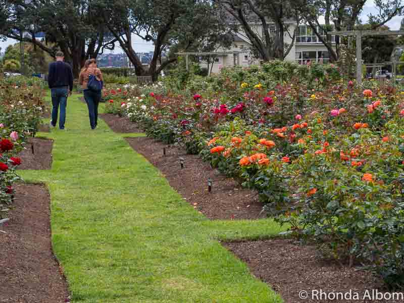 Walking path through the Parnell Rose Gardens in Auckland New Zealand.