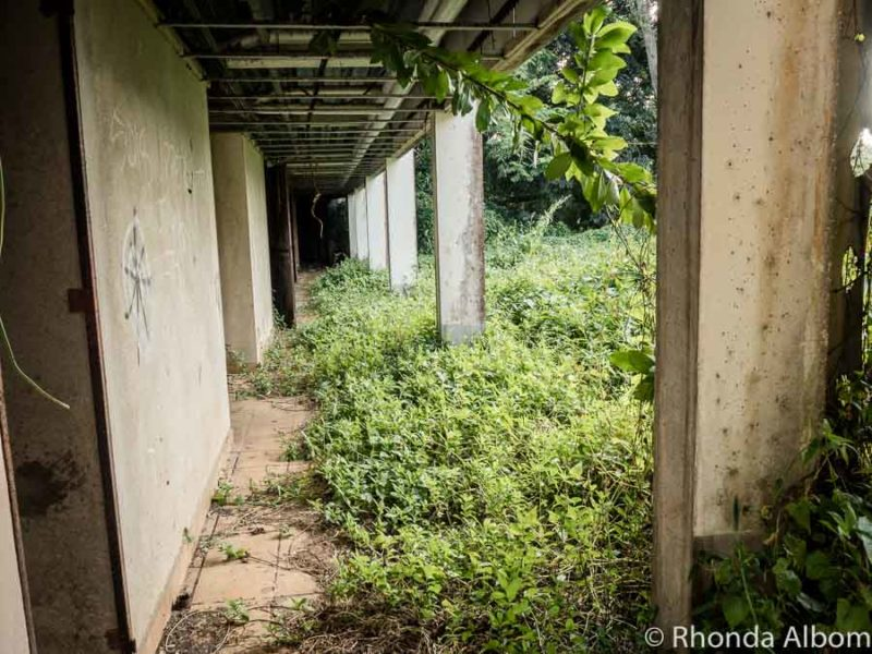 Exterior walkway covered in overgrown jungle in derelict hotel in the Cook Islands