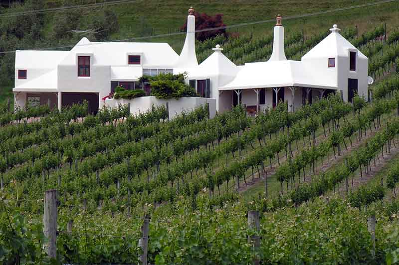 Rows of green grape vines contrast the stark white building of Te Mata Vineyard in New Zealand