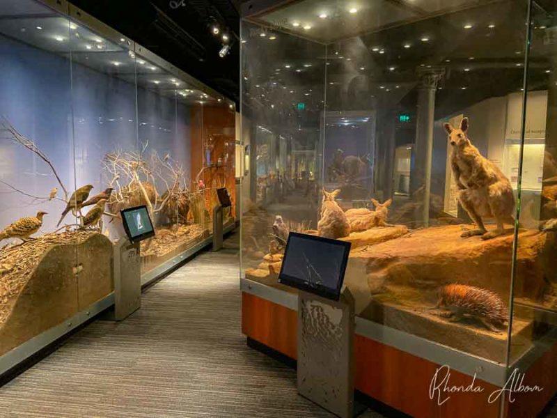 Exposición de animales en el Museo de Australia Meridional en Adelaida