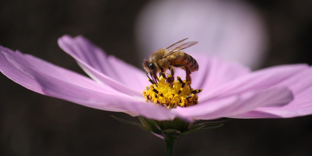 Flower photo by Sarah E Albom