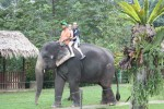 Feeding, Bathing and Riding Elephants in Malaysia