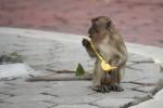 Travelers Aren't Immune To Danger: Don't Pet the Monkeys!