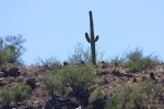 Celebrating a Lone Saguaro As We Drove Through The Arizona Desert