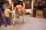 Donkeys, Chickens and Other Animals at the Fes Medina in Morocco