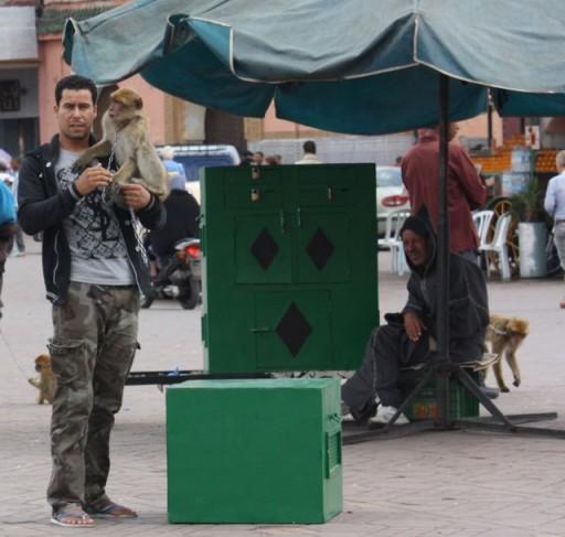 marrakesh monkeys